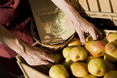 Harvest, Potager du Roi