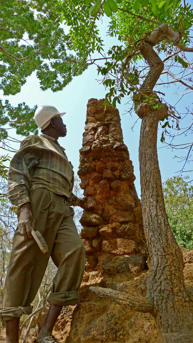 A conservator assesses a rampart damaged by tree growth, 2010
