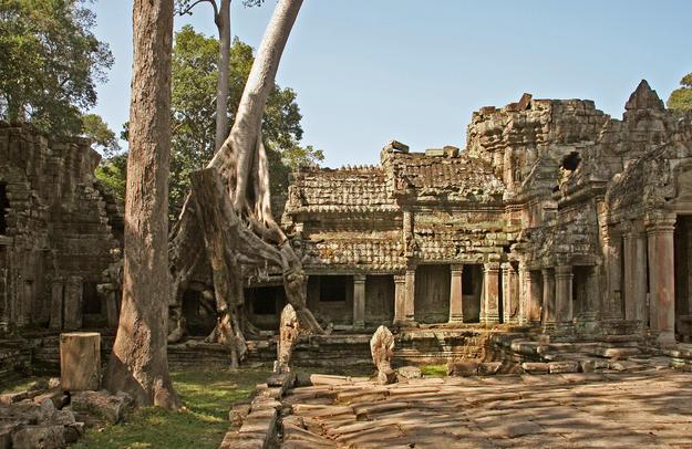 The ruins among a dense jungle setting, 2007