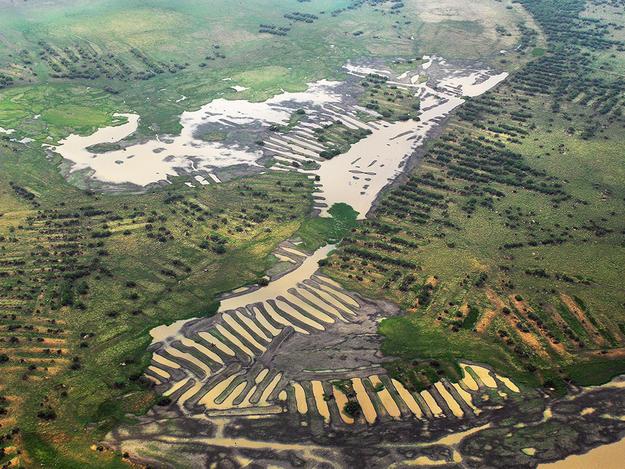 Ancient Ridged Fields of the San Jorge River Floodplain