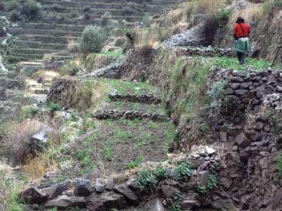 Laraos Terraces