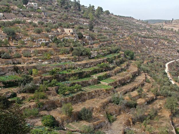 Ancient Irrigated Terraces of Battir