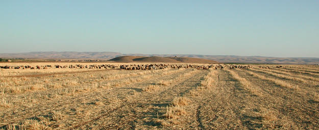 Site being used for sheep herding and farming, 2001