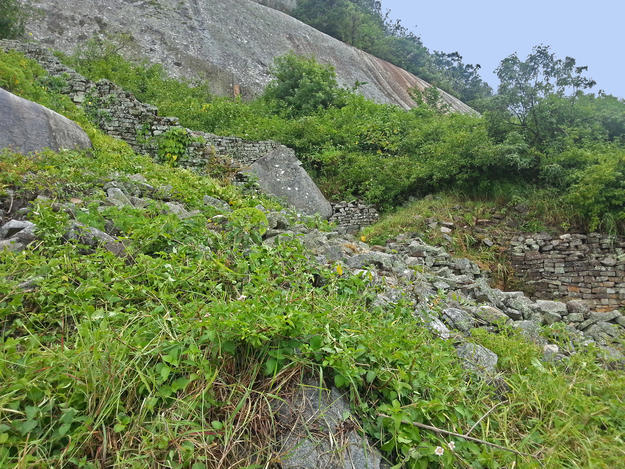 Lantana, an invasive flowering shrub that was introduced to Zimbabwe in the early twentieth century, is shown here growing over the ruins, 2015