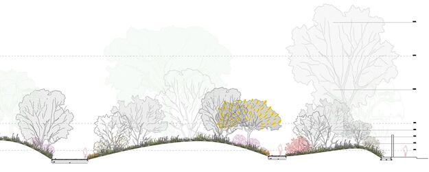 Trees in the urban landscape proposal for the park gardens. Drawing credit: Burgos&Garrido Arquitectos - LLAMA architecture & urban design