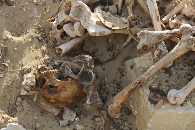 Human remains found at Abusir el-Malek, 201