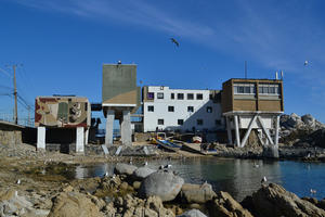 Montemar Institute of Marine Biology, Chile