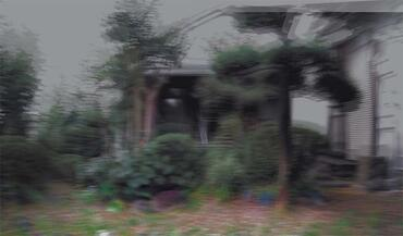 Defocused view of Mr. Fujikawa's garden, where he was during the main shock.