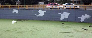 Swans alongside the canal, courtesy of Fundacion López de La Rosa.